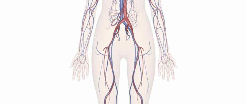 Effets des ventouses sur le système cardiovasculaire : ventousothérapie sanguine
